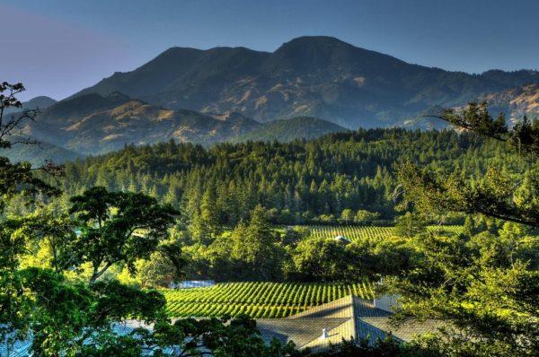 Вид на виноградники города Напа