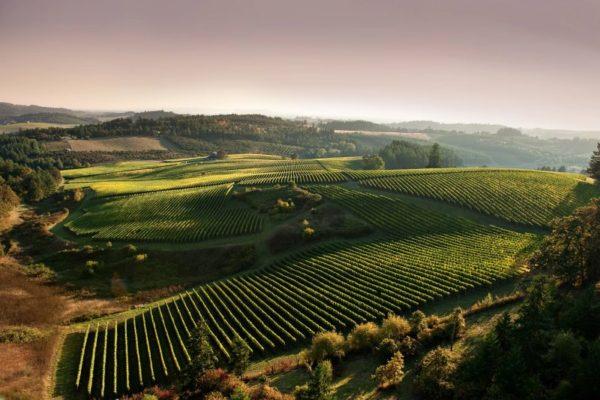 Виноградники Портланда