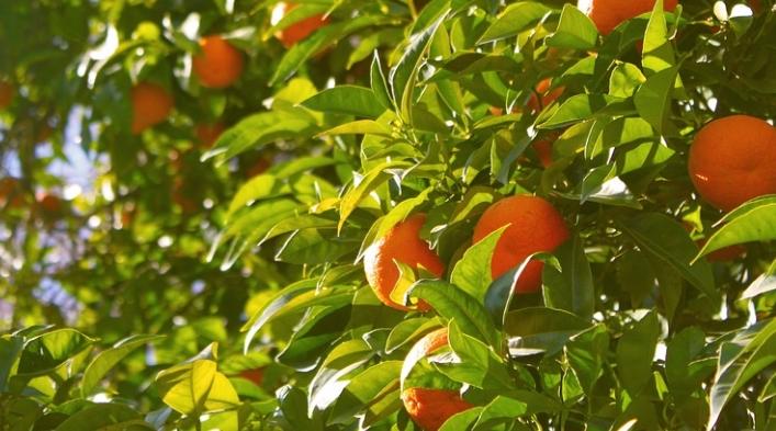Корфу апельсин