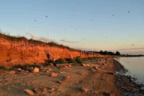 Ласточки на берегу