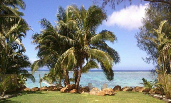 Пальмы на берегу. Острова