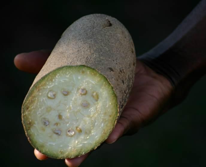 Разрезанный плод колбасного дерева