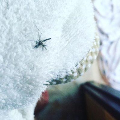 Тайский комар