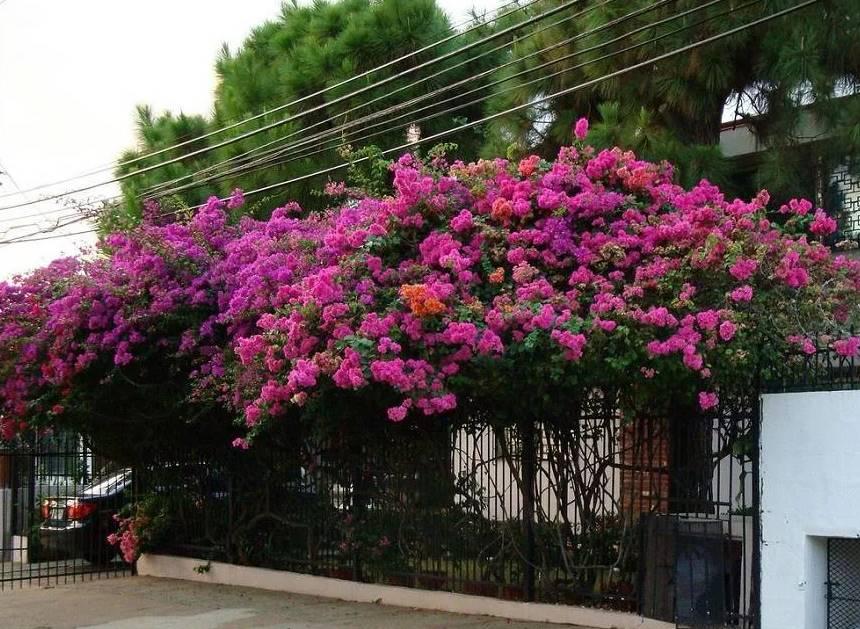 Цветы Турции