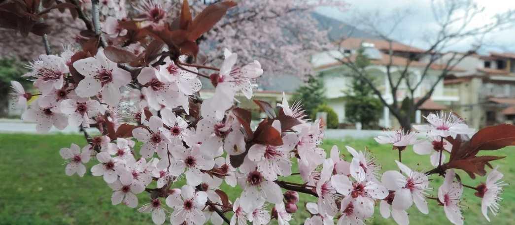 Цветы весной в Греции