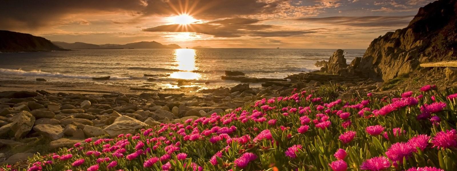 пейзаж 2 побережье с цветами