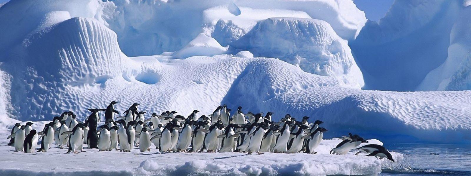 Стая пингвинов в Антарктиде